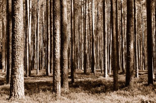neben unendlich vielen Seen gibt es auch riesige Wälder in Finnland; generell ist Finnland recht dünn besiedelt