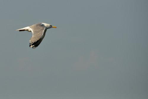 mein persönliches Lieblingsfoto; ich nenn es den resignierten Flieger von Helsinki ;-)