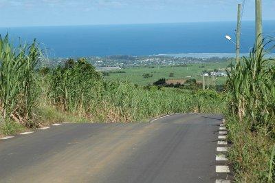 Zuckerrohr findet man überall auf Mauritius