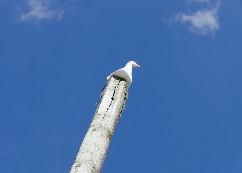 eine Seemöwe auf einem Mast