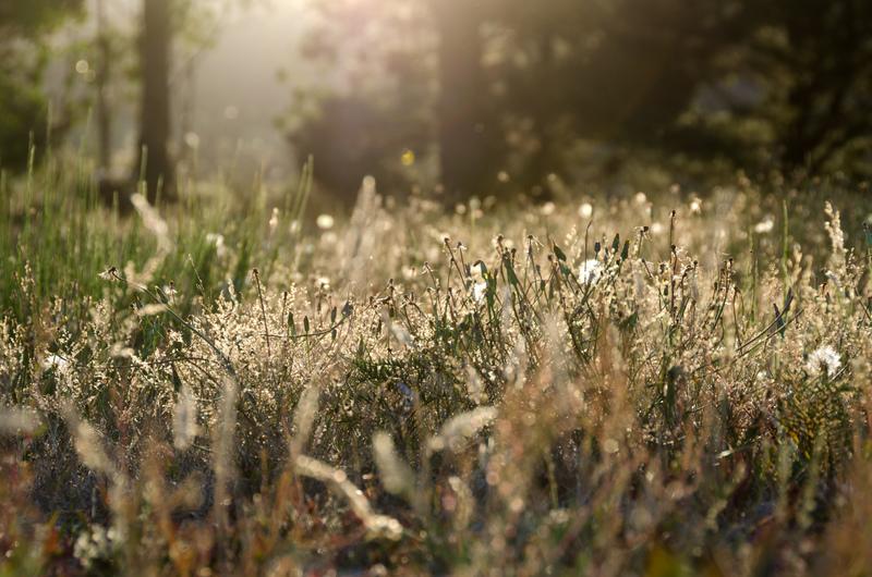 eine Sommerwiese aufgenommen mit Gegenlicht