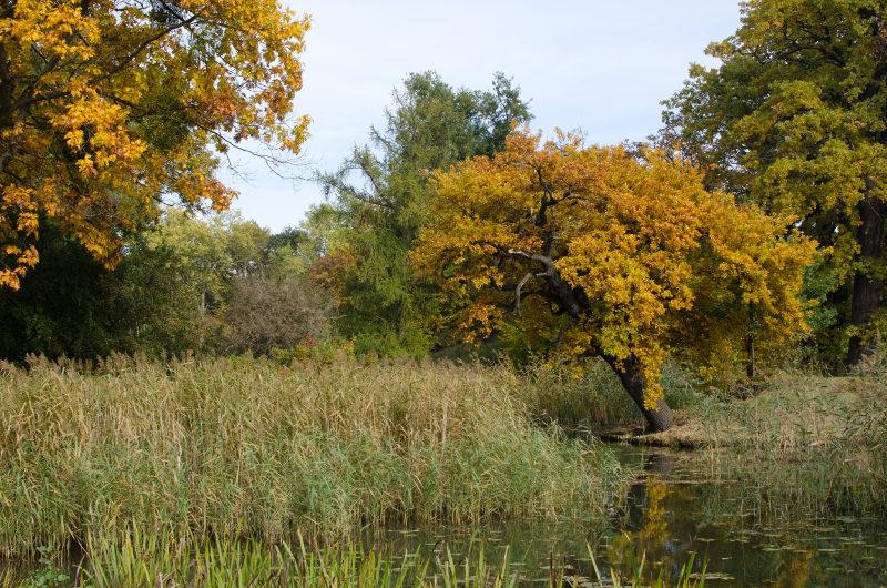 fast schon ein Sumpf im Wörlitzer Park