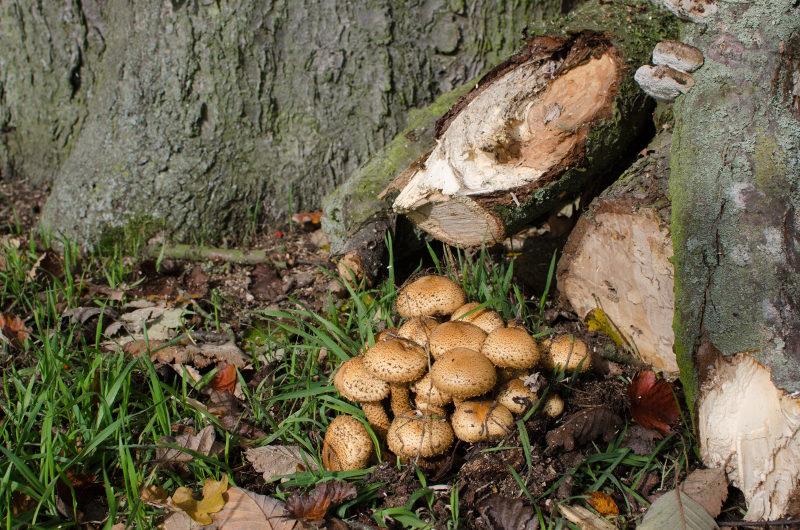 Pilze an Baumstamm